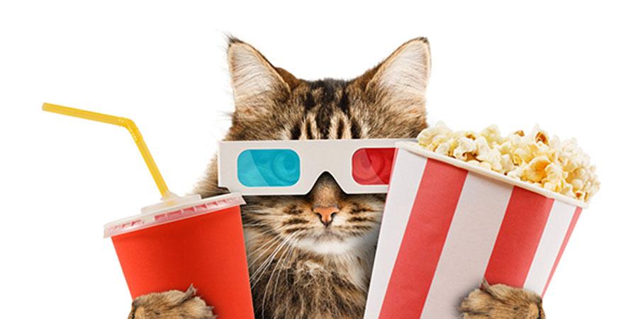 Can TV match binge-watching capabilities of Netflix? - Amagi