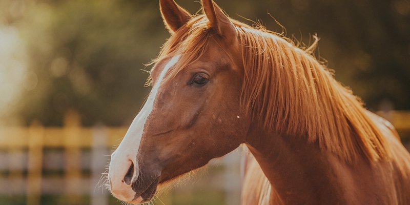 Launching an equestrian sports channel in Europe using cloud